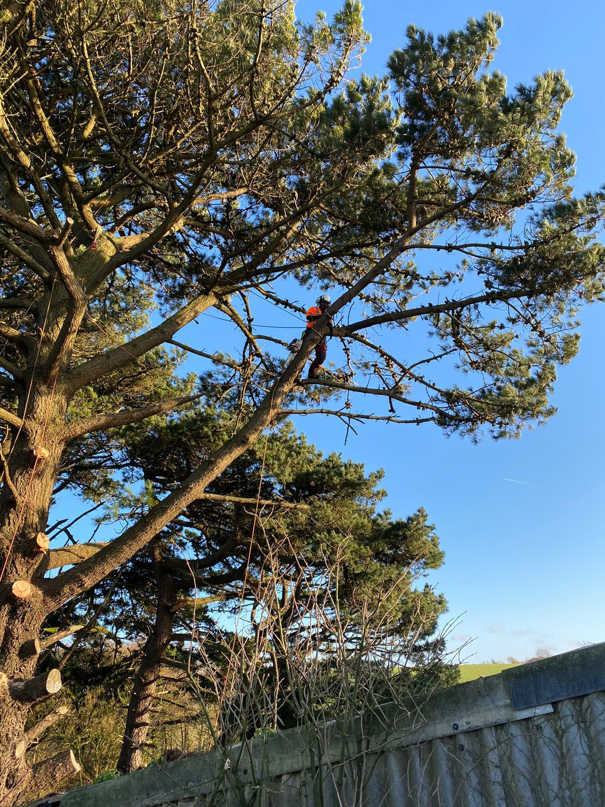 AG Trees